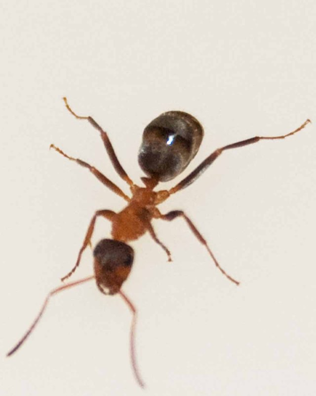 bathroom ant