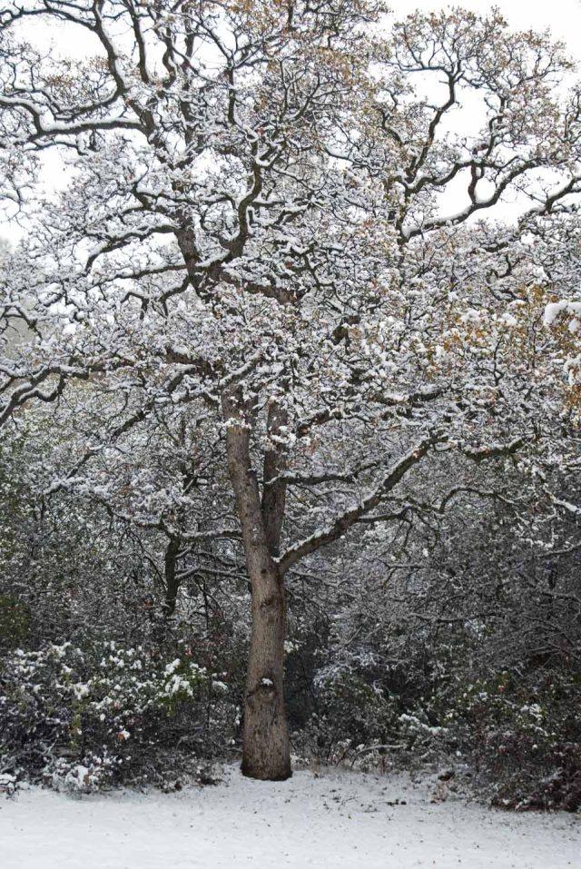 December snow GV