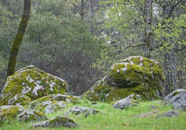 mossy oaks 2