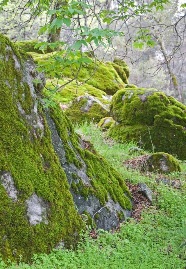 mossy oaks 3