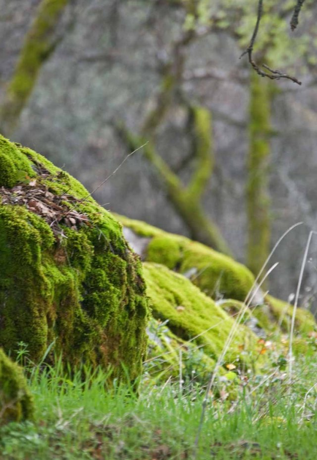 mossy oaks 4