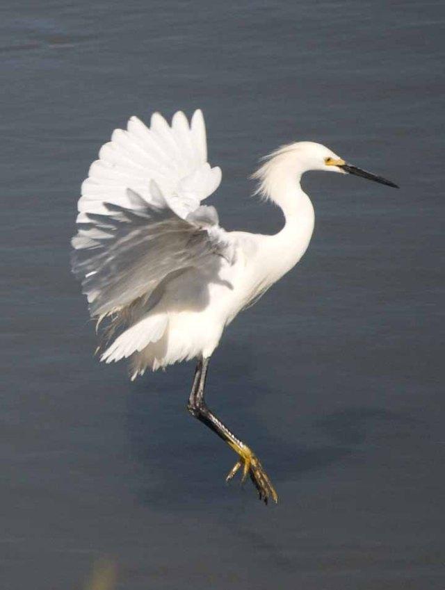 egret untouched