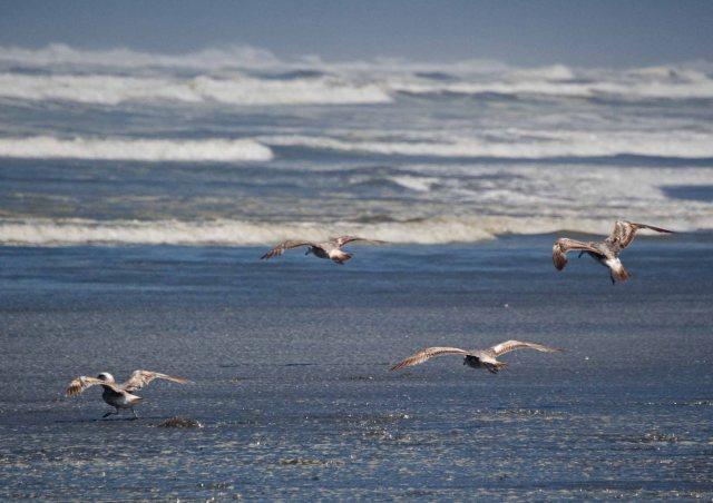 four gulls